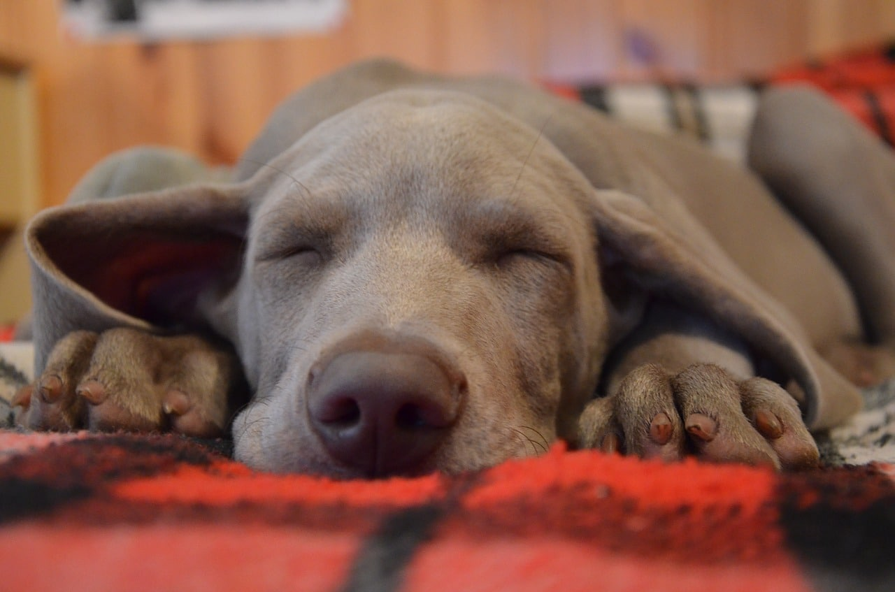 How Much Do Dogs Sleep - Sleep Patterns