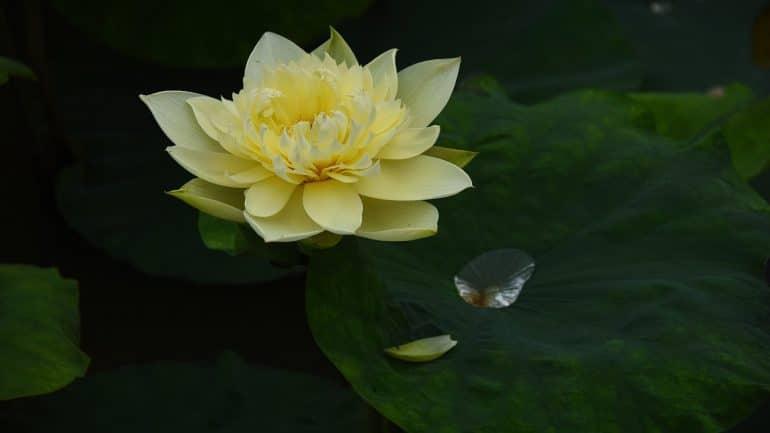 Meditation Statistics - Featured
