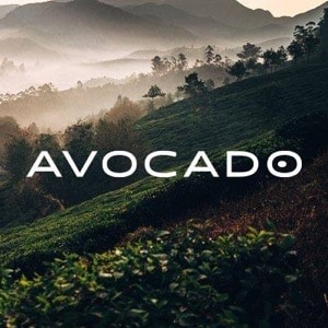 Best Mattress for Back Pain - Avocado