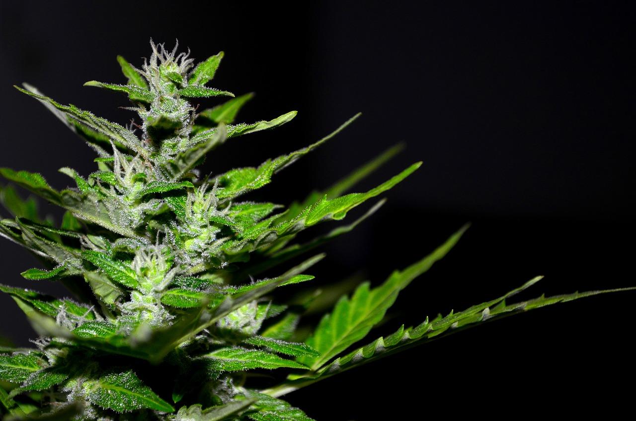 Marijuana for Sleep - Cannabis and Sleep