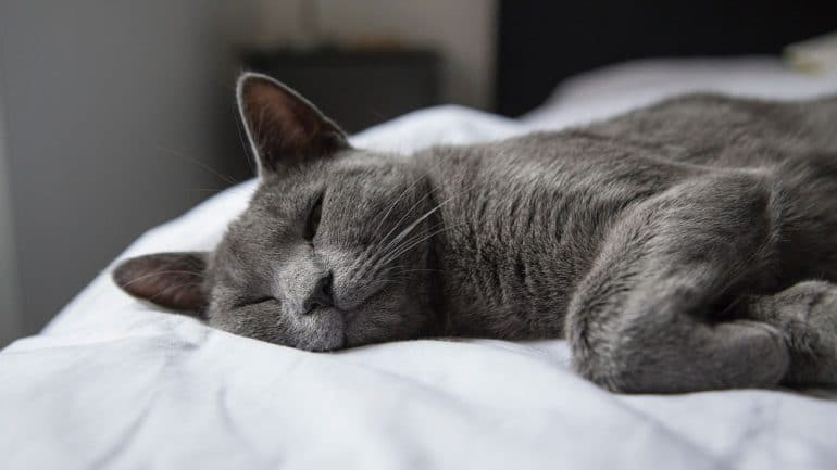 How much do cats sleep - Improve cats sleep