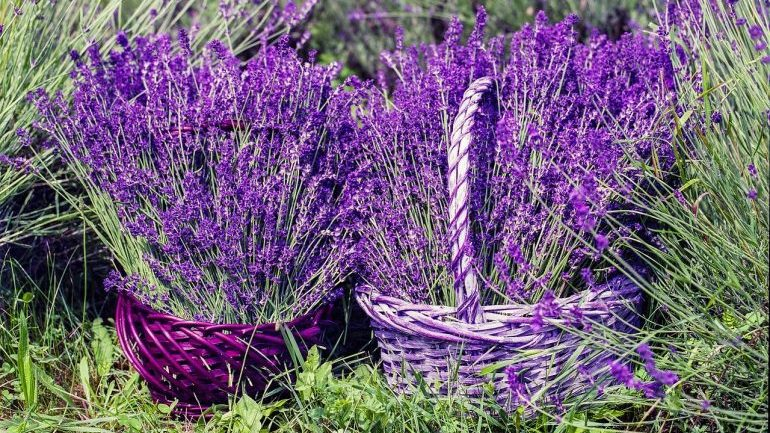How to Sleep Better - Lavender