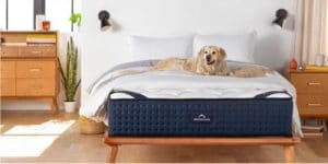 DreamCloud Mattress Reviews