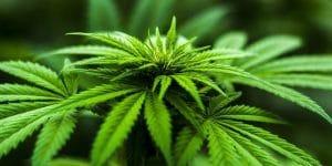 CBD Mattresses — The Latest Cannabis Hype?
