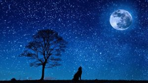 Our Sleep Cycles are in Sync with the Moon
